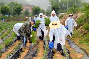 한국교직원공제회 임직원들은 비가 오는 궂은 날씨에도 불구하고 지난 14일 경기도 양평군 단월면 섬이마을을 찾아 고추 모종 심기 등의 뜻깊은 농촌 일손 돕기 봉사를 펼쳤다. (사진제공: 한국교직원공제회)