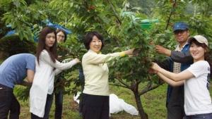 한국소비자원(원장 김영신, www.kca.go.kr)은 6월 8일(금) 도농간 교류 확대의 일환으로 충청북도 음성군 갑산체리마을에서 임원과 2012년 신입사원들이 함께 농촌일손돕기 행사를 실시했다. (사진제공: 한국소비자원)