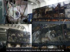 최근 온라인 커뮤니티는 제주도에서 배를 이용한 보신탕용 개들의 수송 과정이 공개되면서 네티즌들의 거센 분노가 들끓기 시작했다. (사진제공: 웍스넷)