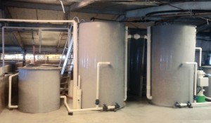 국립수산과학원이 자연재해로부터 안정적인 양식생산을 위해 한국형 해수 순환여과양식시스템 기술의 현장적용과 상용화를 추진한다
