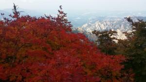 올해 설악산의 첫 단풍이 22일 시작되었다