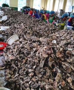 GS수퍼마켓이 통영 생굴·전통 홍시 등 제철 특화 상품을 연이어 출시하고 있다