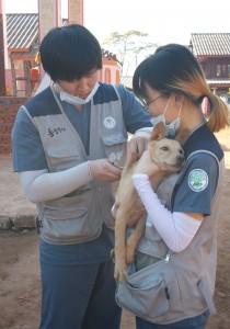 건국대학교 수의과대학 학생 봉사단 바이오필리아 학생들과 수의학과 교수, 건국대 수의대 동문 수의사 등으로 구성된 해외 수의료 봉사단이 1월 16~24일 라오스 비엔티엔주에서 해외 동물의료 봉사활동을 펼쳤다
