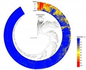 일본 모리나가 유업이 B.롱검 아종 롱검이 모든 연령대에 광범위하게 분포돼 있는 이유를 밝힐 수 있는 새로운 게놈 연구 결과를  발표했다.  이미지는 건강한 일본인 대상자의 장내 미생물군 분포