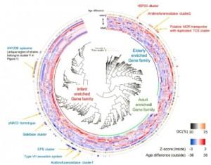 일본 모리나가 유업이 B.롱검 아종 롱검이 모든 연령대에 광범위하게 분포돼 있는 이유를 밝힐 수 있는 새로운 게놈 연구 결과를  발표했다.  이미지는 각기 다른 연령대의 피험자로부터 분리한 B.롱검 아종 롱검에서 강화된 유전자