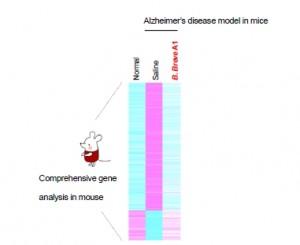 쥐 해마체의 종합적인 유전자 발현 분석