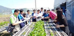 2017년 충남지역 마이스터대학에서 딸기 품목을 교육하고 있다