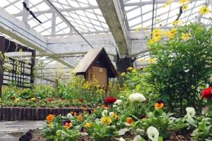 나비 먹이 식물로 꾸며진 나비정원