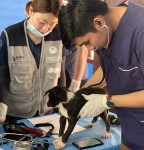건국대 수의대 학생들이 라오스에서 동물의료 봉사활동을 진행했다