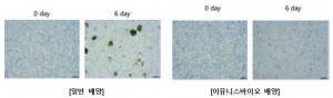 배양법에 따른 세포의 차이