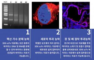 핵산가수분해 미니항체, 3D8 scFv의 3가지 특징
