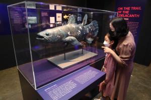 프랑스 국립 자연사박물관 특별전 '바다, 미지로의 탐험' 전시장을 찾은 한 가족이 전시장 천장에 설치된 실러캔스 표본을 관람하고 있다