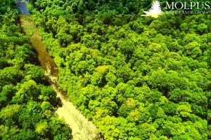 몰퍼스 우드랜즈 그룹, 산림 탄소 상쇄 프로젝트 100만 에이커 돌파