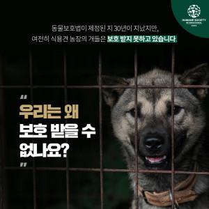 휴메인 소사이어티 인터내셔널이 동물보호법 제정 30년을 맞아 개식용 인식 변화를 보여주는 인포그래픽을 발표했다