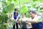 삼성SDS 고순동 대표이사 사장이 경기도 파주에 위치한 교남어유지동산에서 지적장애인들과 봉사리더들과 함께 오이, 토마토 등 야채를 수확하고 있다.