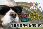"""2012 개나소나콘서트, """"전용버스로 전용캠핑장에서 럭셔리하게"""""""