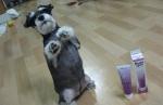 콜라겐 영양제 먹고 우리 강아지 각질 사라졌어요!