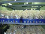 하나바이텍의 꽃송이버섯 대량생산 병재배 사진