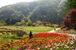 가평에 위치한 아침고요수목원에서 봄나들이 봄꽃축제가 진행중이다.
