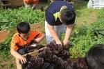 다솜 청소년방과후아카데미 청소년들이 텃밭 작물을 수확하고 있다