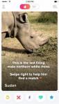 북부흰코뿔소 수단의 틴더 프로필
