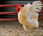 싱가포르 호텔 기업 로앤비홀드 그룹이 100% 케이지 프리 계란 사용을 약속하며 세계 최대 동물보호 단체인 휴메인 소사이어티 인터내셔널과 함께 동물복지 향상에 힘쓰기로 했다