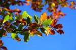가을 여행지의 단풍