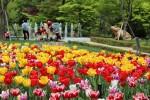 식물원의 봄 튤립
