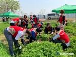 환경실천연합회의 교란식물 제거활동