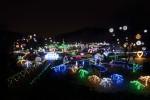 신구대학교식물원이 겨울 2019 꽃빛축제를 개최한다