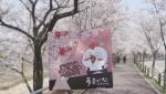 투존치킨이 '벚꽃패키지' 봄맞이 이벤트를 진행한다