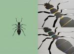 곤충, 그래픽아트를 만나다 展 대표 작품 개미, 금박, 홀로그램박, 420mm*594mm