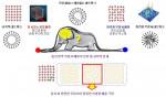 질서(빨간 점, 보아뱀의 꼬리)와 완전한 무질서(파란 점, 보아뱀의 머리)는 물리적/통계적으로 엄밀하게 정의된 매질 상태이다. 그 중간 영역(보아뱀의 배 안)에는 수많은 자유도를