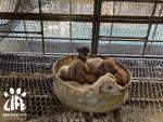 동물보호단체 HSI와 라이프가 국유지에서 10년간 불법 운영한 개 사육장을 적발했다