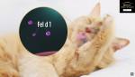 고양이 침샘과 피지샘에서 발생되는 Fel d 1 알러젠