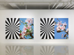 Exstacy Almond Blossom Series (L), 214×304㎝