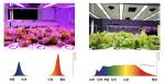 왼쪽부터 물 먹이는 소 같은 식물재배와 태양광 스펙트럼 근접 재배