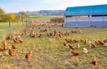 AGCO 농업재단이 글로벌 동물 파트너십에 5만달러 보조금과 함께 두 번째 연례상을 수여한다