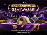2021 웨스트민스터 도그쇼 우승견 와사비(Wasabi)
