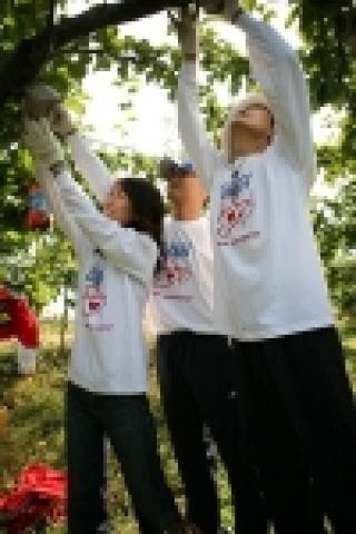 푸르덴셜 직원들이 자원봉사의 날을 맞아 배따기 일손을 돕고 있는 모습
