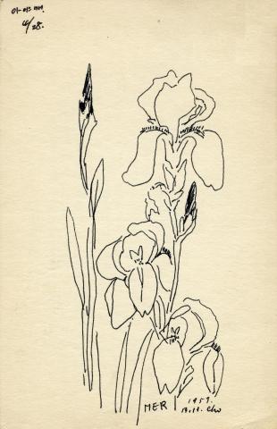 꽃과사랑展꽃스케치_붓꽃
