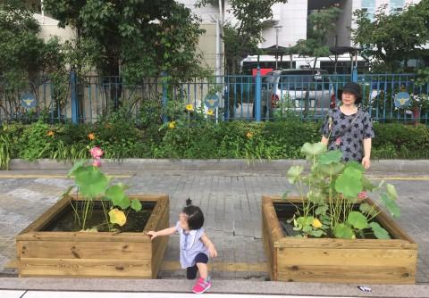 가든프로젝트가 고려대학교에서 연꽃과 수생식물을 주제로 8월 17일부터 9월 21일까지 총 6회에 걸쳐 특강을 진행한다. 사진은 가든프로젝트가 시공한 성북구청 앞 도로 변의 연 텃밭