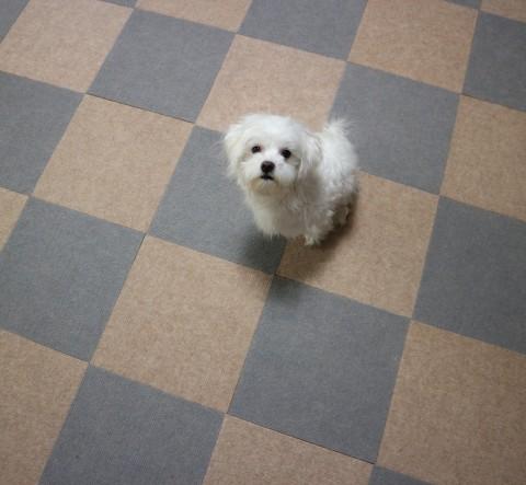 지니글로벌 퍼피가드가 강아지 미끄럼 방지 매트 10만장 판매를 돌파했다고 밝혔다. 사진은 매트 위에서 강아지가 휴식을 취하고 있다