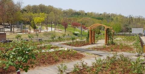 북서울꿈의숲에 조성된 장미원