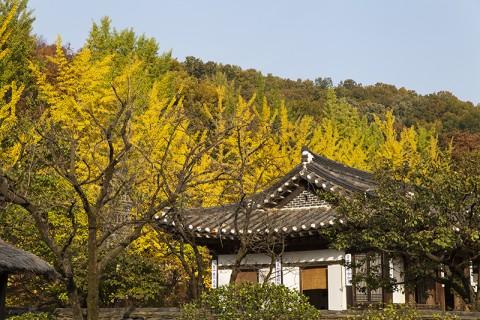 한국민속촌이 가을시즌 특별축제 낭만조선을 개최한다
