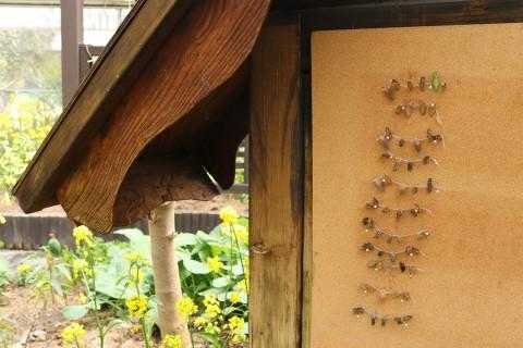 전시대에서 번데기가 나비로 우화하는 과정을 관찰할 수 있다