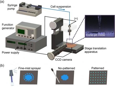 건국대 연구팀이 정전분무 세포배열 이용 알코올 발효기법을 개발했다