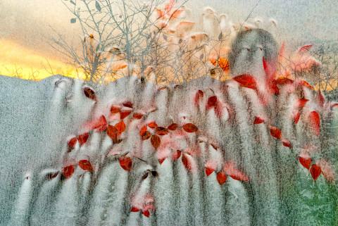 채종렬의 'Window frost' 사진전이 6월 9일부터 7월 5일까지 갤러리 강호에서 열린다