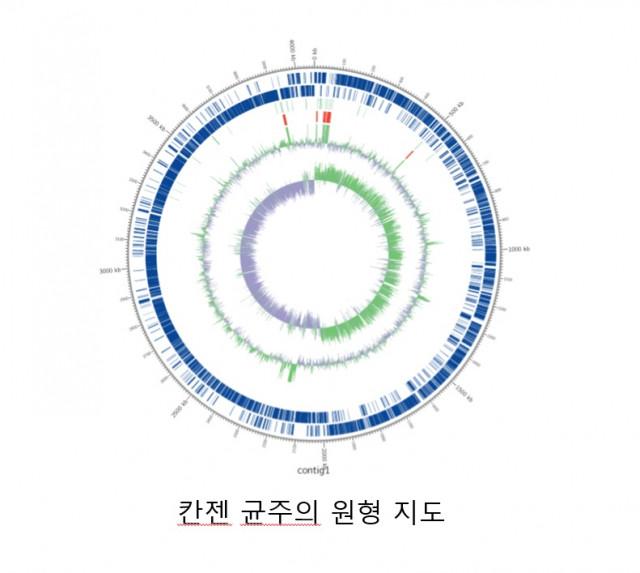 칸젠이 설산에서 발굴한 보툴리눔 균주 유전자 원형 지도
