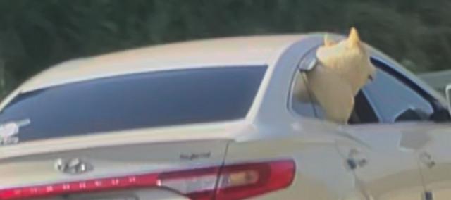안전운전에 방해가 되지 않도록 뒷좌석 동승자가 애견을 잘 챙긴다